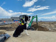 It's a dog's life — trained border collies are working shifts, shooing seabirds from construction to expand the Hampton Roads Bridge-Tunnel. Photo courtesy Flyaway Geese